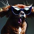 狗狗登陸時尚界 Karen Walker用明星狗當代言人