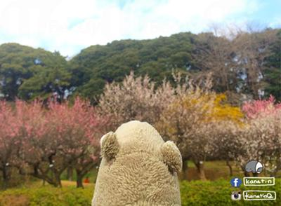 Spring flowers blooming and early Kakigori(かき氷)