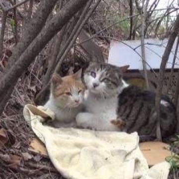 貓貓之間的珍貴友誼!日夜守護在受傷朋友身邊